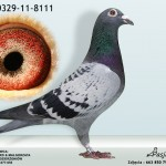 PL-0329-11-8111
