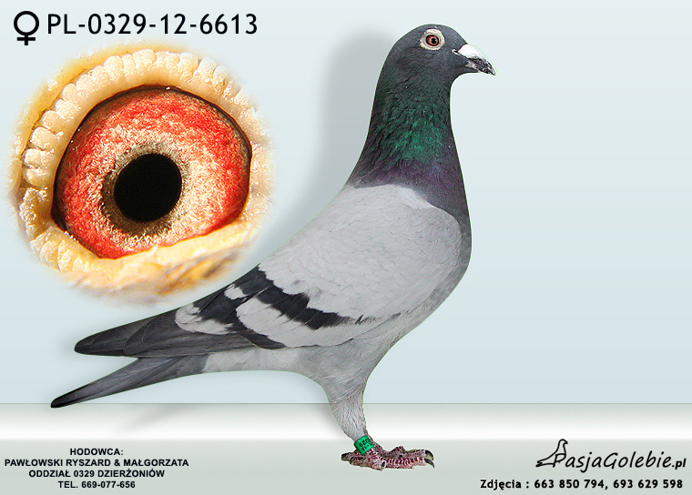 PL-0329-12-6613