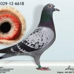 PL-0329-12-6618