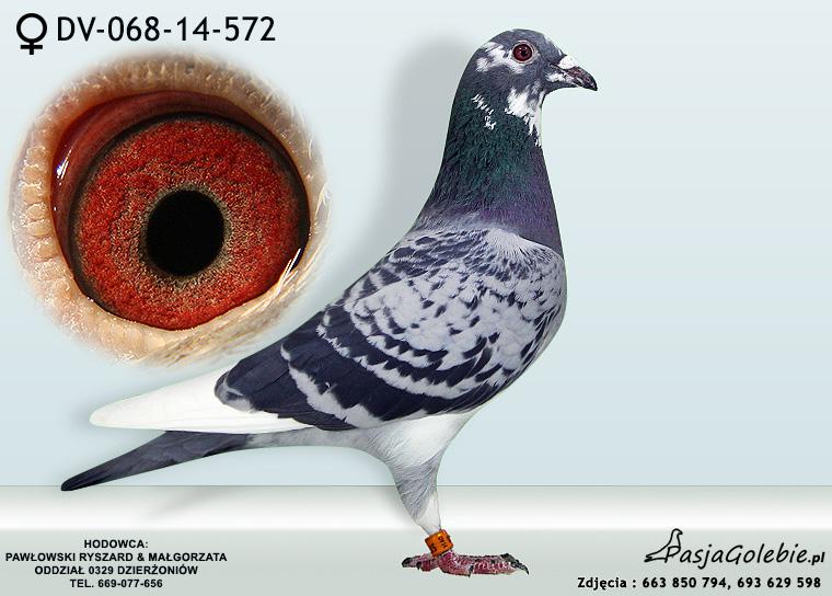 DV-068-14-572