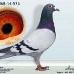 DV-068-14-575