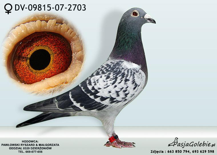 DV-09815-07-2703