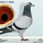 PL-0240-11-5026
