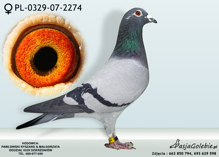 PL-0329-07-2274
