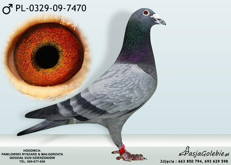 PL-0329-09-7470