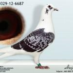 PL-0329-12-6687