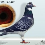 PL-0329-14-1477