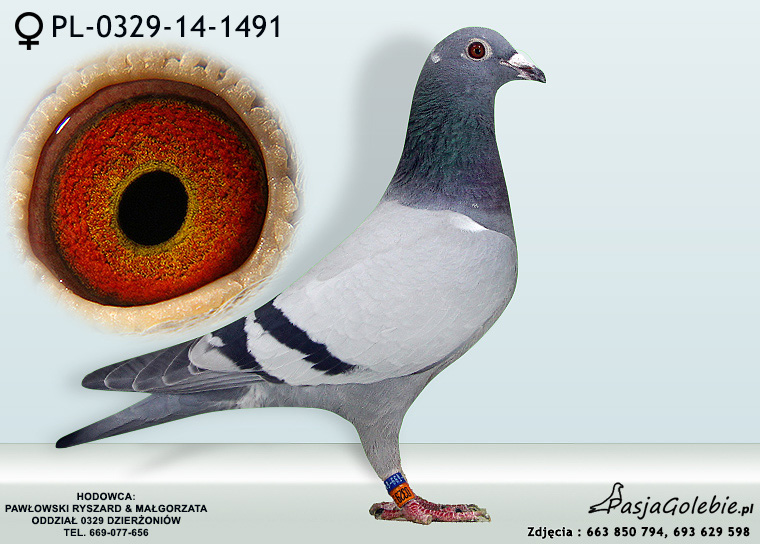 PL-0329-14-1491