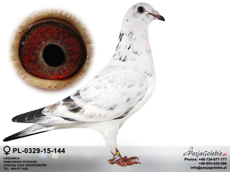 PL-0329-15-144