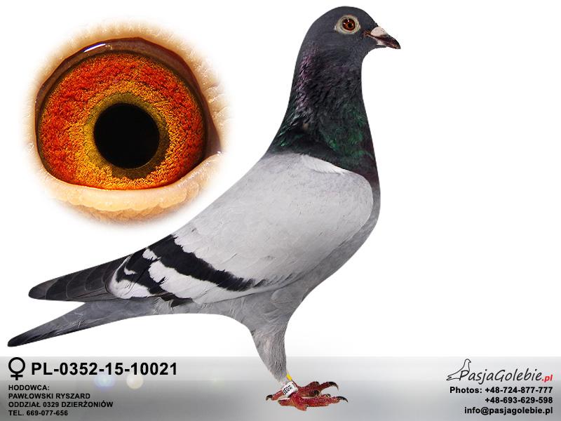 PL-0352-15-10021