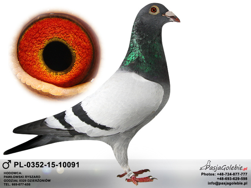 PL-0352-15-10091