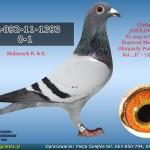 PL-092-11-1393